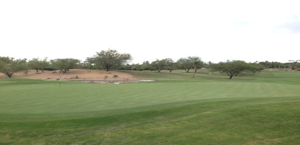 The Phoenician - Oasis Course 1
